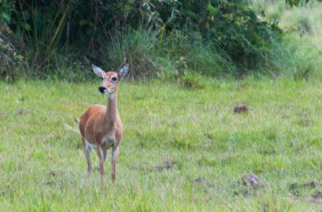 expedicao-pantanal-keep-track (3)