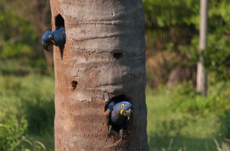 expedicao-pantanal-keep-track (4)