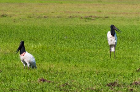 expedicao-pantanal-keep-track (5)