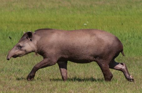expedicao-pantanal-keep-track (6)