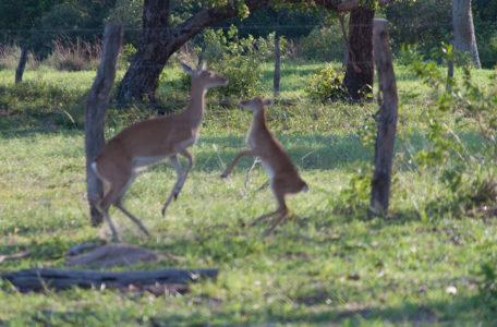 expedicao-pantanal-keep-track (8)