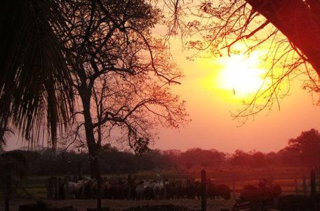Expedição Pantanal | KeepTrack