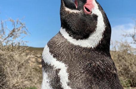 expedicao-patagonia-e-carretera-austral-2020-(23)
