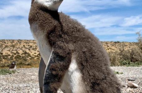 expedicao-patagonia-e-carretera-austral-2020-(26)