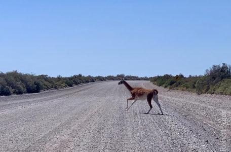 expedicao-patagonia-e-carretera-austral-2020-(30)