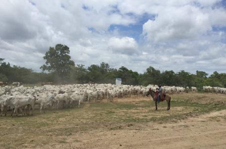 expedicao-pantanal-4×4-8