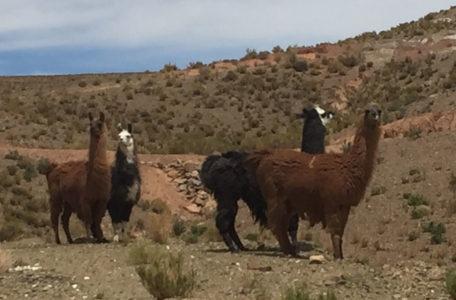 Expedicao-Atacama (27)