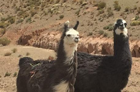 Expedicao-Atacama (28)