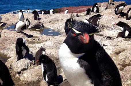 expedicao-gaia-patagonia-carretera-austral-8