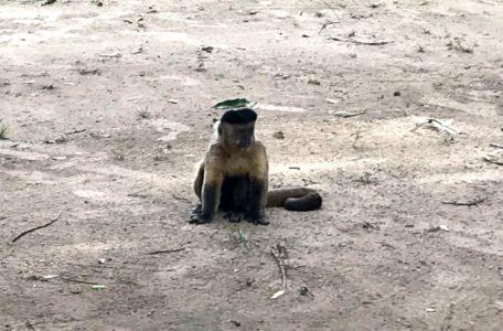 expedicao-pantanal-2019 (11)