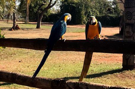 expedicao-pantanal-2019 (12)