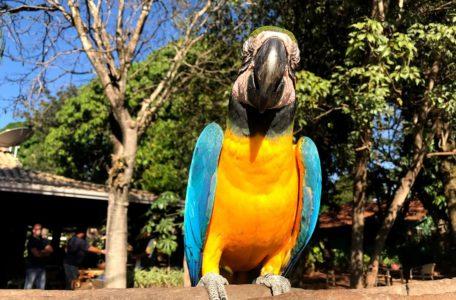 expedicao-pantanal-2019 (13)