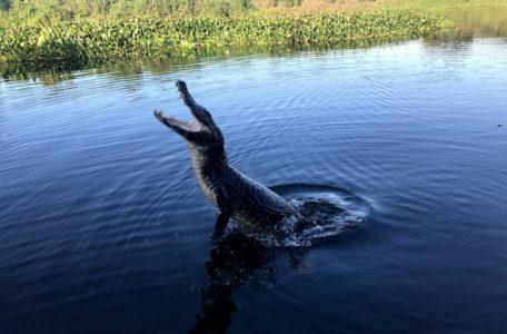 expedicao-pantanal-2019 (15)
