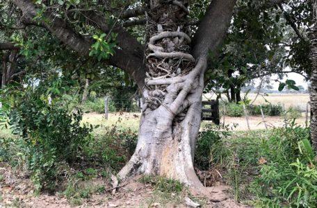 expedicao-pantanal-2019 (20)