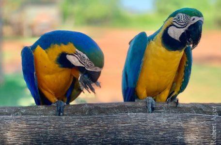 expedicao-pantanal-keep-track-gaia (10)