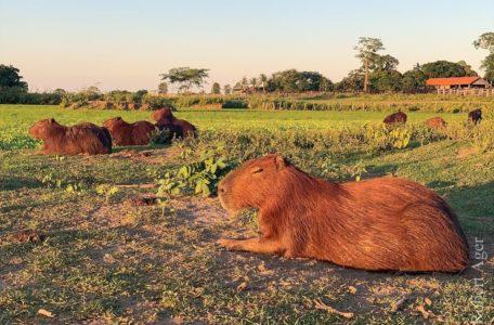 expedicao-pantanal-keep-track-gaia (9)